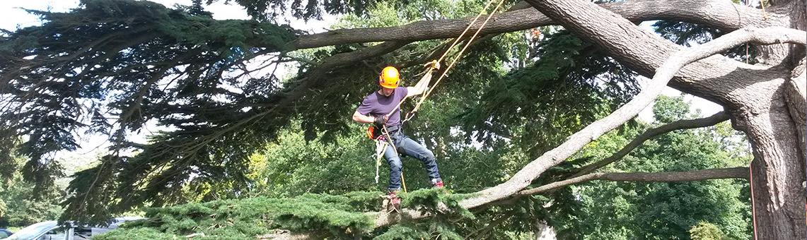 arboriculture training